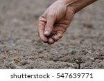 planting | Shutterstock . vector #547639771