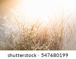 blurred dry flower. nature... | Shutterstock . vector #547680199