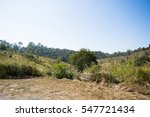 forest at khao yai national... | Shutterstock . vector #547721434