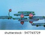 Lotus Ponds Lotus .