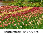 Flower Bed Of Different  Kinds...