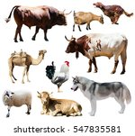 Dogs And Other Farm Animals....