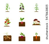 plant set icons in cartoon... | Shutterstock .eps vector #547863805