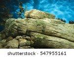 view of yellow kelp vegetation... | Shutterstock . vector #547955161