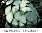 detail of heads of blue agave.... | Shutterstock . vector #547965187