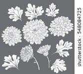 set of beautiful chrysanthemum...   Shutterstock .eps vector #548084725