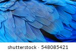 close up of colorful feathers ... | Shutterstock . vector #548085421