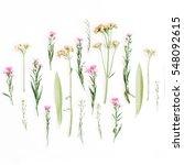 creative wildflowers...   Shutterstock . vector #548092615
