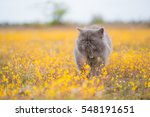 Stock photo young cat plays on meadow 548191651