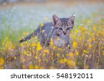 Stock photo young cat plays on meadow 548192011
