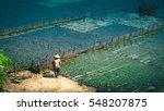 Small photo of People collect seaweed plantations algal - Nusa Penida, Bali, Indonesia