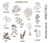 antimicrobial herbs. hand drawn ... | Shutterstock .eps vector #548277811