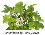 Fresh Green Branches Of A...