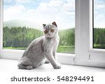 Cute Cat On Windowsill And...