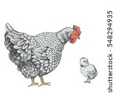 illustration little chicken and ... | Shutterstock .eps vector #548294935