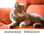 Stock photo fluffy cat with green eyes 548322214