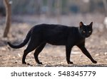 Stock photo black cat walking down the street 548345779