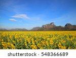 Sunflower With Sunflower Field...
