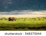 wild african elephant in the... | Shutterstock . vector #548375044