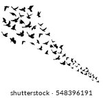 Isolated Silhouette Flocks Of...