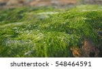 Close Up Image Of Moss Lichen...