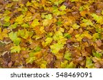 colorful background of fallen... | Shutterstock . vector #548469091