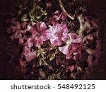 grunge flower background texture | Shutterstock . vector #548492125