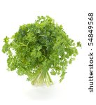 parsley green fresh herb bunch... | Shutterstock . vector #54849568