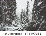 Winter Snowy Coniferous Forest...