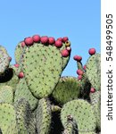Prickly Pear Cactus Silhouette...