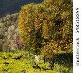Small photo of orange trees , olive trees, lemon tree almond tree - spring in Spain.
