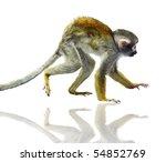 Squirrel Monkey On The White...