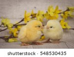 two fluffy yellow chicks easter ...