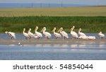 pelicans resting   Shutterstock . vector #54854044