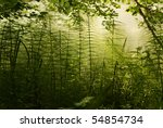 Bush Of Horsetail With The...