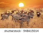 zebra at sunset in the... | Shutterstock . vector #548615014
