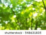 green bokeh light leaf natural... | Shutterstock . vector #548631835