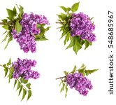 branch of blossoming purple... | Shutterstock . vector #548685967