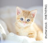 kitten red tabby 4 | Shutterstock . vector #548745961
