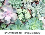 Arrangement Of The Succulents...