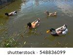 duck | Shutterstock . vector #548836099