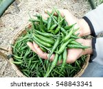 hand holding some green chili... | Shutterstock . vector #548843341