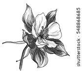 wild  columbine aquilegia...   Shutterstock . vector #548868685