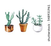 set of cactus and succulent... | Shutterstock . vector #548931961