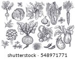 vegetables  roots  salads and... | Shutterstock .eps vector #548971771