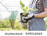 midsection of gardener holding...   Shutterstock . vector #549016069