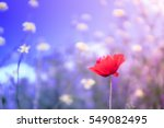 red poppy with purple starry... | Shutterstock . vector #549082495