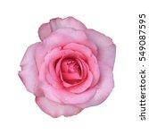 Fresh Beautiful Pink Rose Peta...