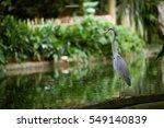 One Grey Heron Standing Beside...