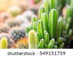 Beatiful Cactus In Pot...